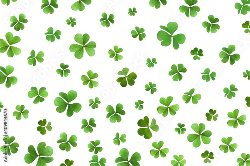 Obraz na plátne Fresh green clover leaves on white background. St. Patrick's Day