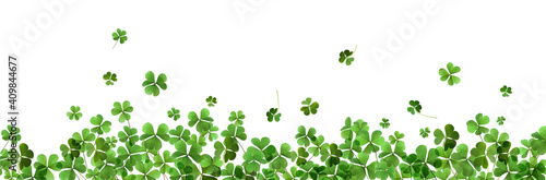 Fotografia, Obraz Fresh green clover leaves on white background, banner design