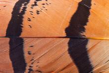 Detail Of A Bustard Feather. BUSTARD - AVUTARDA (Otis Tarda)