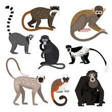 Different Monkey Set. Cartoon Primates Of Wildlife, Funny Zoo Characters, Colobus Ring-tail Lemur Bolivian Squirrel Monkey Siamang Emperor Tamarin Dusky Leaf Monkey Hanuman Langur Cotton Top Tamarin
