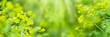 Leinwandbild Motiv wiesenblumen in der sonne