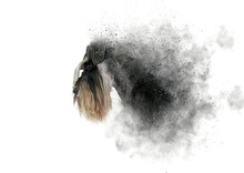 Illustration Of Black And White Dog Miniature Schnauzer