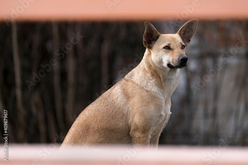 Carta da parati Portrait of homeless dog in a frame of wooden timbers of bench.