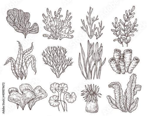 Fotografie, Obraz Sketch seaweed