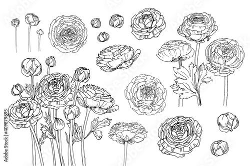 Flowers vector line drawing Fototapeta