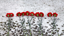 Red Carnations On White Snow