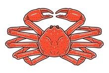 Snow Crab. Colored Vector Illustration.