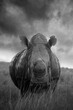 canvas print picture - Rhino in the wild, in South Africa.