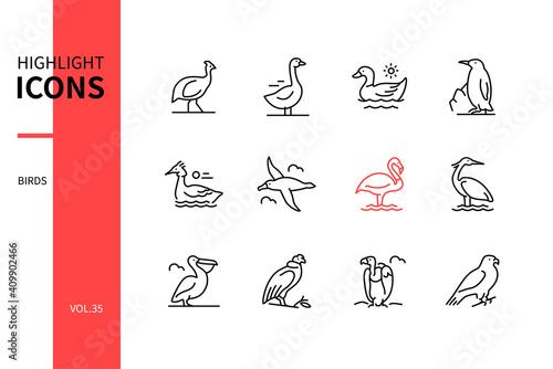 Photo Bird species - modern line design style icons set
