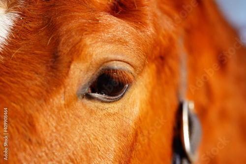 Foto portrait of a horse
