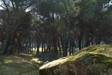 Fototapeta Na ścianę - krajobraz góry drzewa las widok natura