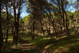 Fototapeta  - krajobraz góry drzewa las widok natura