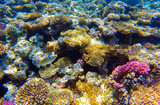 incredibly beautiful combinations of colors and shapes of living coral reef and fish in the Red Sea in Egypt, Sharm El Sheikh