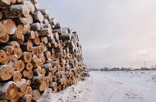 Piles Of Freshly Cut Logs Under The Snow, Ready To Be Taken Out Of The Forest.