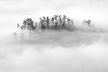 Trees On A Hill In The Mist From The Igedo In Cangas E Onis; Asturias.