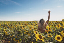 Back View Of Unrecognizable Nude Female Standing In Blooming Sunflower Field In Summer And Looking At Camera
