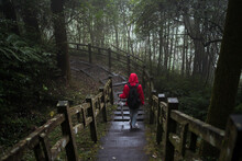 From Above Back View Of Unrecognizable Tourist In Raincoat And With Backpack Walking On Pedestrian Bridge Leading Through Dense Green Woods In Rainy Day