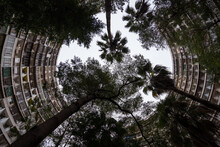 From Below Of Tall Tropical Trees Growing Near High Residential Building With Curved Walls In Kaohsiung City In Taiwan
