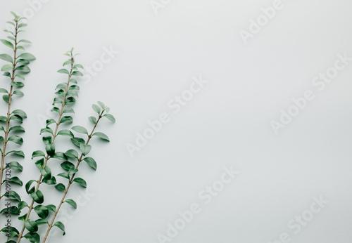 Fotografie, Obraz Multiple green leaves on twigs