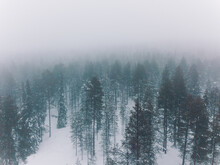 Cold Winter Landscape Of Hilly Terrain With Coniferous Forest Covered With Hoarfrost In Gloomy Snowy Day