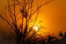 Low Angle Of Vivid Sundown Sun Shining Through Branches Of Tree In Nature