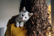 Cute Little White Spotted Cat Resting On Shoulder Of Unrecognizable Female Owner At Home