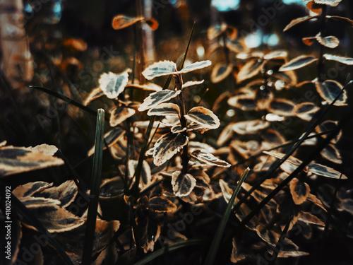 Obraz na plátně leaves on the ground