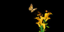 A Butterfly Sniffing A Yellow Flower Pollen Black Bokeh Background 3d Illustration
