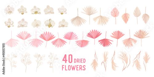 Dried pampas grass, lunaria flowers, orchid, tropical palm leaves vector bouquets. Pastel watercolor floral template