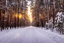 Automobile Road Through A Pine Winter Forest Covered With Snow On A Clear Sunny Day.