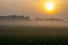 Sunrise On A Very Foggy Morning In A Cornfield.