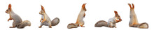 Set With Cute Squirrels On White Background, Banner Design