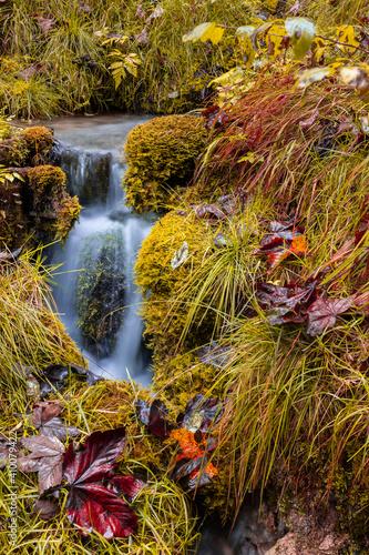 Autumn in the Magic Forest near Ramsau in Berchtesgadener Land, Bavaria, Germany. © DirkR