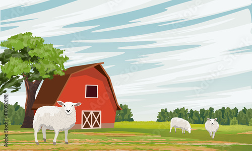 Fototapeta Rural barn on the field. Farm. Forest and pasture with grazing white sheep. Vector farm landscape obraz