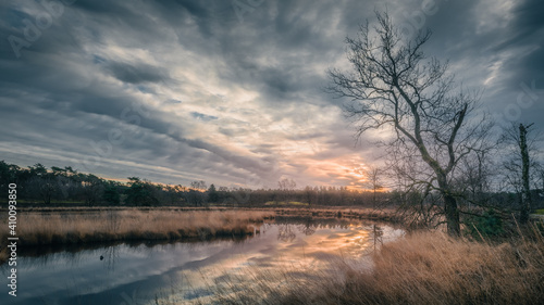 Obraz na plátně sunrise with colorful clouded sky above a fen with a bare tree and reet in the f