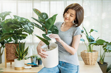 Portrait Of Asian Beautiful Woman Hands Holding Green Leaf Plant Pot. Hispanic Girl In Gray T-shirt Gardening At Home. Go Green Environment, Hobby Or Leisure Time During Stay Home Lock Down Concept