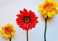 Isolated Shot Of A Red Daisy And Two Sunflowers On White Background