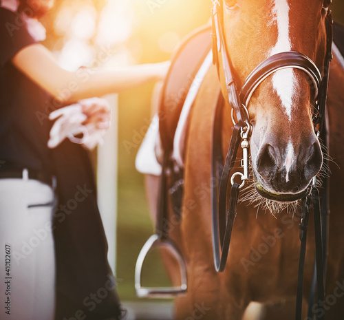 Fototapeta The rider, holding gloves in one hand, adjusts the straps on the saddle of a beautiful sorrel horse, illuminated by the warm sunlight on a summer day. Equestrian sports. Horse riding. obraz