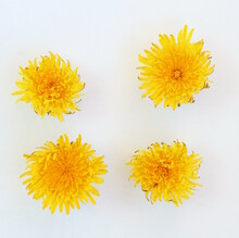 Yellow Dandelion Flower Button On A White Isolated Background, Template For Your Design, Natural Eco-friendly Harvesting
