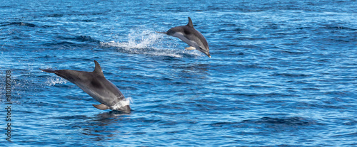 Fotografija Dolphins playing in waves