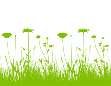 Seamless Border With Oxeye Daisy, Corn Poppy And Meadow Vetchling In Grass Isolated On White Background