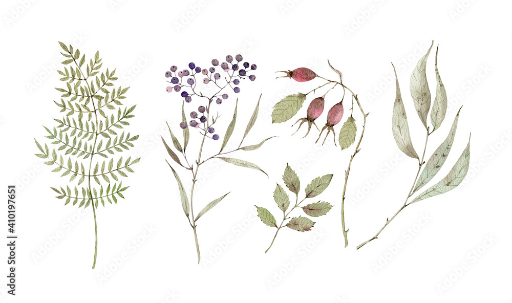 Fototapeta Watercolor set with botanical elements, berries, dry branches and leaves. hand painted on white background