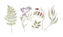 Watercolor Set With Botanical Elements, Berries, Dry Branches And Leaves. Hand Painted On White Background