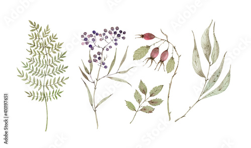 Photographie Watercolor set with botanical elements, berries, dry branches and leaves
