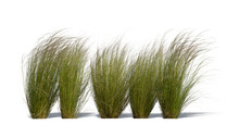 Row Of Ornamental Grasses Swaying In The Wind Isolated On White Background