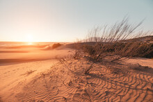 The Solitary Shrub Grows On Sand Dunes In Arid Climates. The Concept Of Ecology And Global Climate Warming