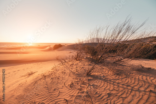 Fotografia The solitary shrub grows on sand dunes in arid climates