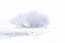 Winter-Weide