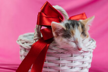 Cute Tricolor Kitten Sleeps In A White Wicker Basket With A Beautiful Red Bow On A Pink Background. Gift Card, Congratulations On The Holidays. Favorite Pets.