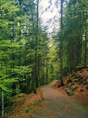 Caminando hacia la profundidad del bosque.
